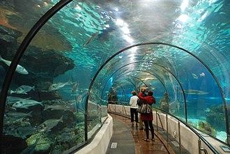 Aquarium Barcelona - Shark tunnel at the aquarium