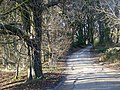 Two Droves, Puddletown Forest - geograph.org.uk - 1180926.jpg