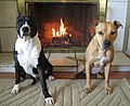 Two dogs and a fireplace.jpg