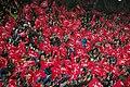 UEFA Euro League FC Salzburg gegen Villarreal 35.JPG