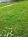 UK grass.jpg