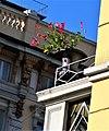 Un fiore in Piazza Oberdan.jpg