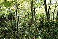 Understory - Institute for Nature Study, Tokyo - DSC02110.JPG