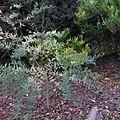 Unknown plant 2013-11-23 15-45-20.jpg