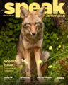 Urban Coyote on Speak magazine cover.png