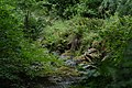Van Damme State Park - Joshua Ganderson.jpg