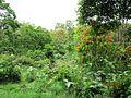 Vazhachal Reserve Forest - panoramio (9).jpg