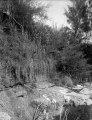 Vegetation (Typha ormbunke, Catuarina) vid öns norra udde. Île Mahakamby, Mahakamby. Madagaskar - SMVK - 022027.tif