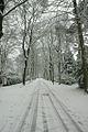 Verhulstlaan in winter - panoramio.jpg