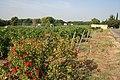 Vignoble d'application du lycée viticole d'Orange Château Mongin.jpg