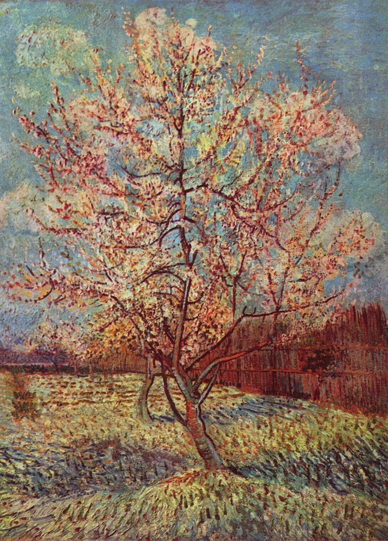 A watercolour of two pink peach trees in a blossoming orchard of trees near a wooden fence under a bright blue sky.