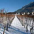 Vineyards in winter, Vaduz, Liechtenstein. Вадуц, Лихтенштейн - panoramio.jpg