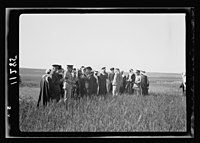 Visit to Beersheba Agricultural Station (Experimental) by Brig. Gen. Allen & staff & talks to Bedouin sheiks of district by station superintendent. Mixed group in field of grain listening to LOC matpc.20533.jpg