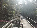 Walking track inside Sundarans.jpg
