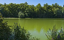 Milky greenish water with vegetation in the foregrounds and trees at rear, the latter of which are reflected slightly in the water