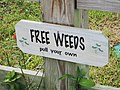 Weed sign - free weeds, Lake Placid, Florida.jpg