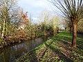 Welse im Stadtgebiet von Delmenhorst.jpg