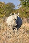 White Rhinoceros Alert 2019-07-27.jpg