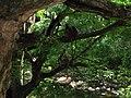 Wild life @ Chinnar Wildlife Sanctuary - panoramio.jpg