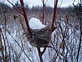 Winter Bird Nest with Snow - panoramio.jpg