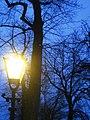 Winter in Den Haag Light! (5254808152).jpg