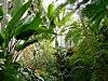 Wnętrze Palmiarni.jpg
