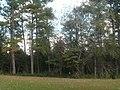 Woods, Horseshoe Bend NMP.jpg