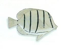 XRF-Acanthurus triostegus.png
