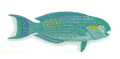 XRF-Chlorurus gibbus.png