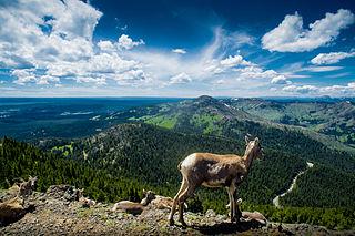 Mount Washburn mountain of the Rocky Mountains