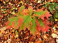 Young Oak Tree - Flickr - treegrow.jpg