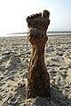Zesteenvoet uit strandpaal.jpg