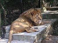Zoo in Yalta 009.jpg