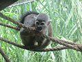 Zoologico de Cali (14985226049).jpg