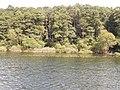 +20180611Müritz-Nationalpark.Blick von der Müritz zum Nationalpark.-081.jpg
