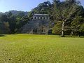 Árbol blanco y Pirámide a Pacal..jpg