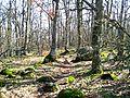 Аю-Даг - ліс на вершині-2.JPG