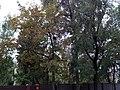 Будинок, в якому у 1957—1984 рр. мешкав Антонов О. К. (4).jpg