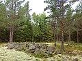 Валаам, лес, природа, камни, мох, флора, заповедник.jpg