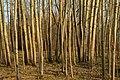 В полоні дерев.jpg