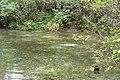Гідрологічна пам'ятка природи Сім джерел Шалигіне Глухівський район.jpg