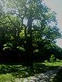 Диканьський ландшафтний парк.jpg