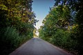 Дорога через ліс.jpg