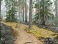 Канельярви- Заходское , низовой пожар 2006 - panoramio - Dmitriy Alekseenkoff (1).jpg