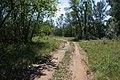 Лесная дорога в южном направлении - panoramio.jpg