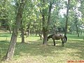 Лошади на берегу Корсуни - panoramio.jpg