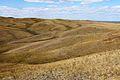 На горе Моховой - panoramio (3).jpg