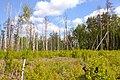 Обводнена ділянка болота у Мельницькому.jpg