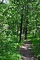 Парк Берёзовая роща в Киеве. Фото 25.jpg