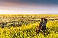 Пейзаж Сивашской степи.jpg